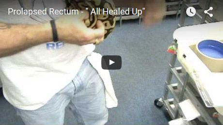 Prolapsed Rectum – All healed up